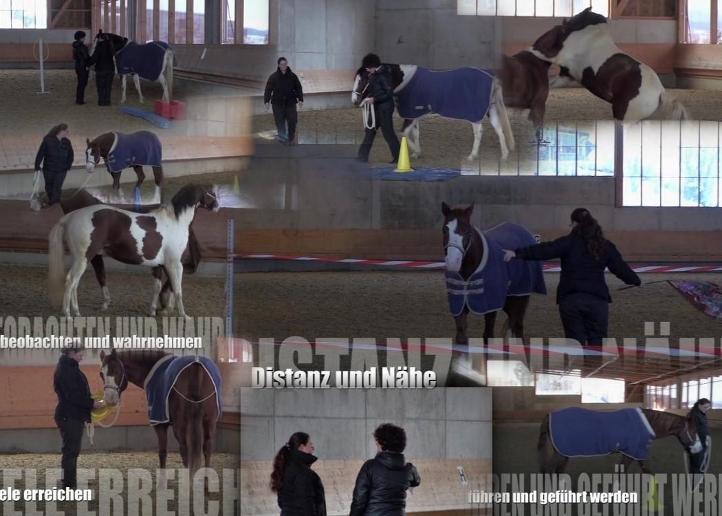 wie wir wirken zeigen uns die Pferde