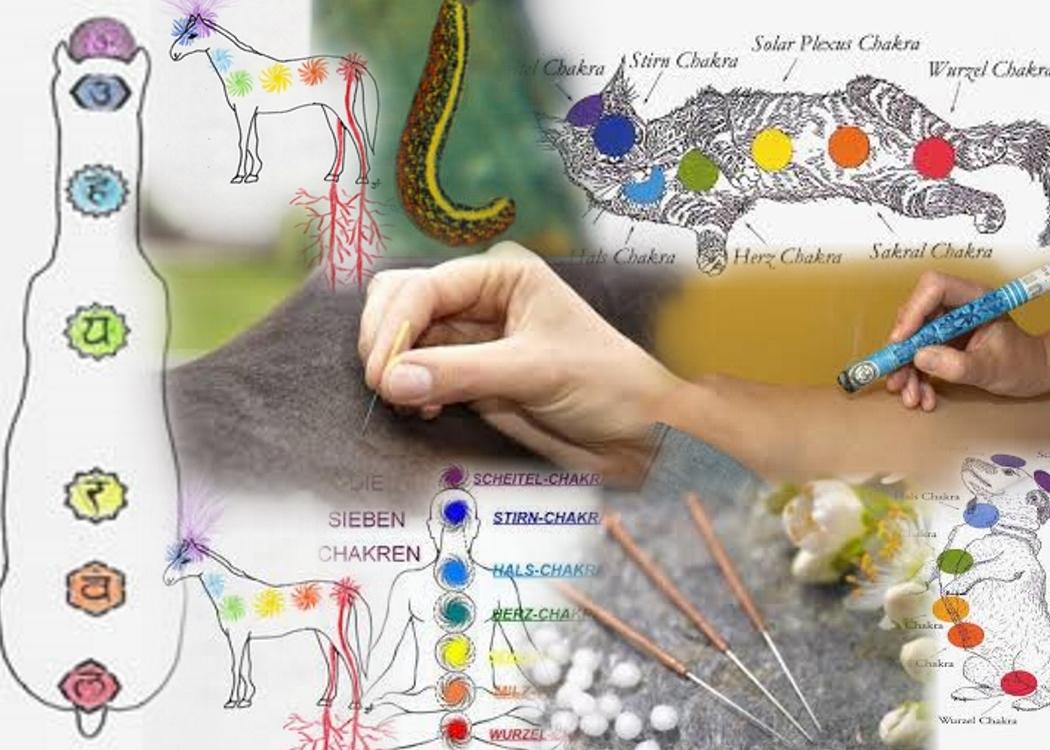 TCM, Akupunktur, Moxa, Kräuter