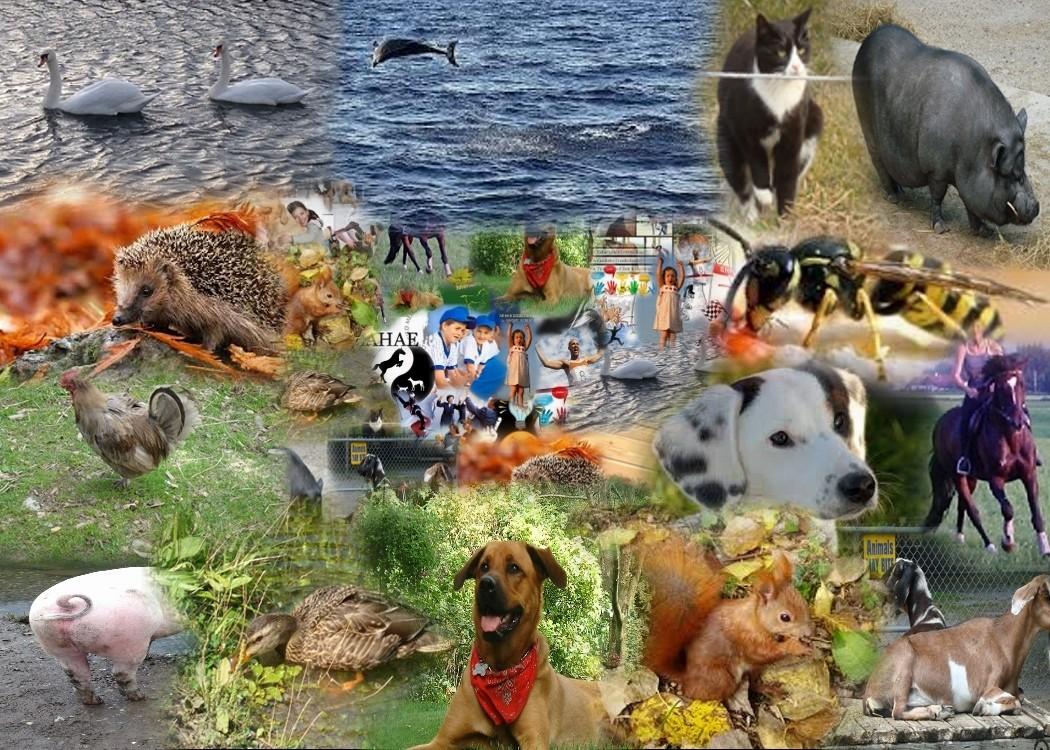 sowie bei Bedarf weiteren Tieren im System