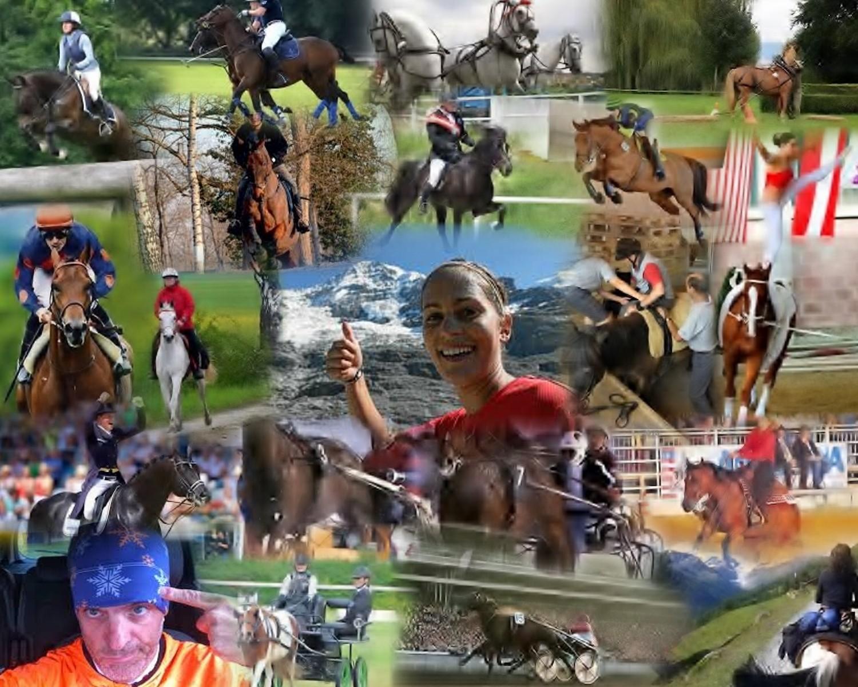 auch von Reitern und Besitzer