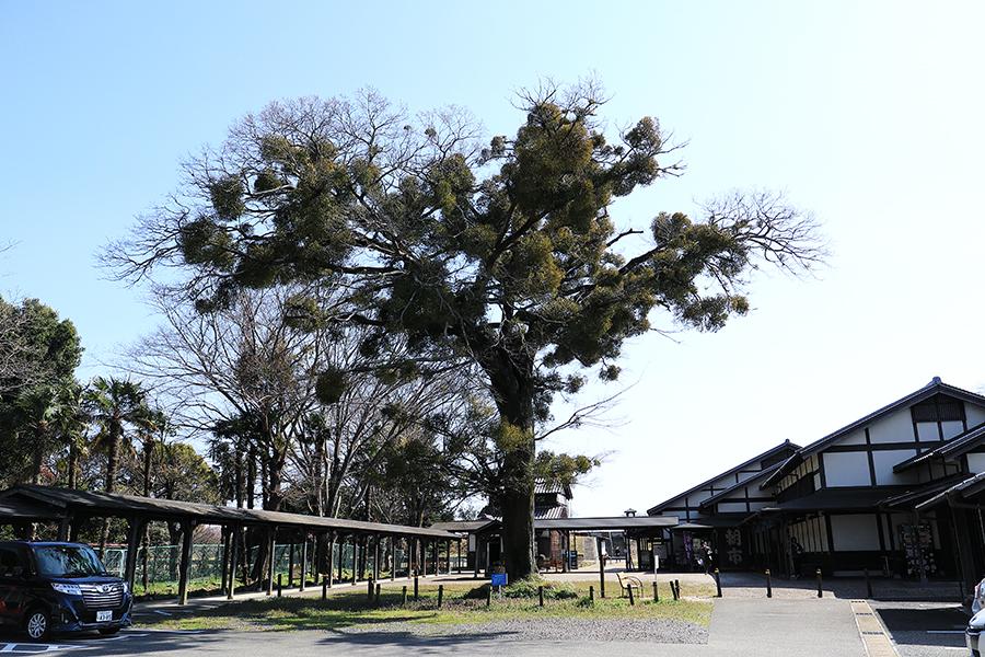 太田宿中山道会館宿り木