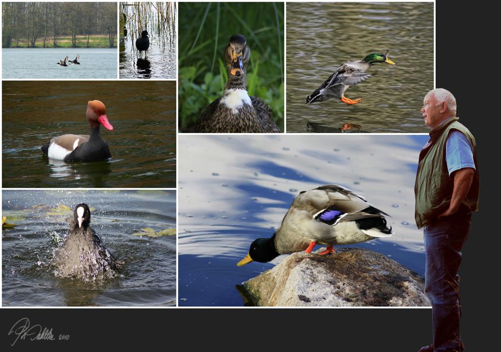 Der Entenflüsterer