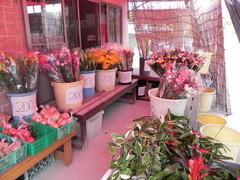 大門屋の花はどれも地元の農家から直接届けられます