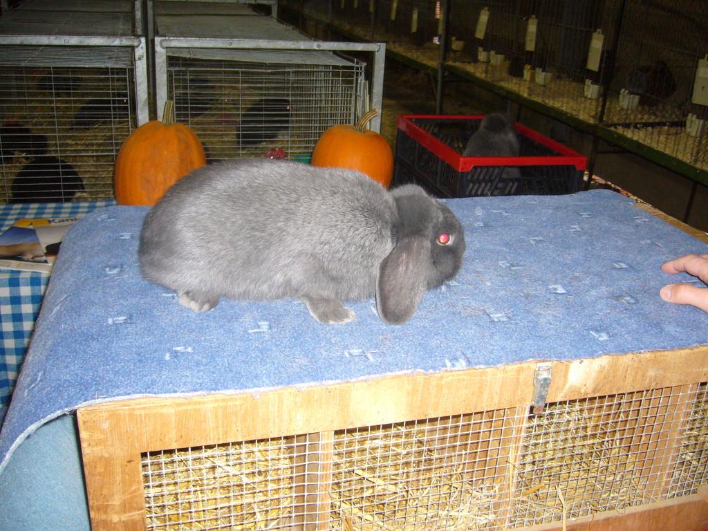 Kaninchen beim richten