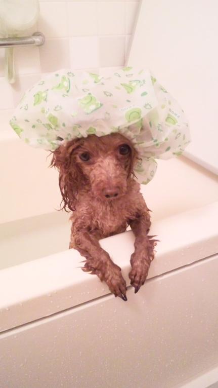 髪の毛濡れたくないんです