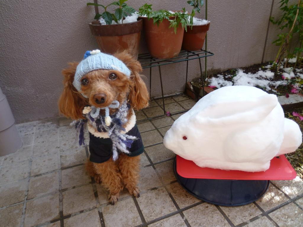 2011 雪がふったぞー