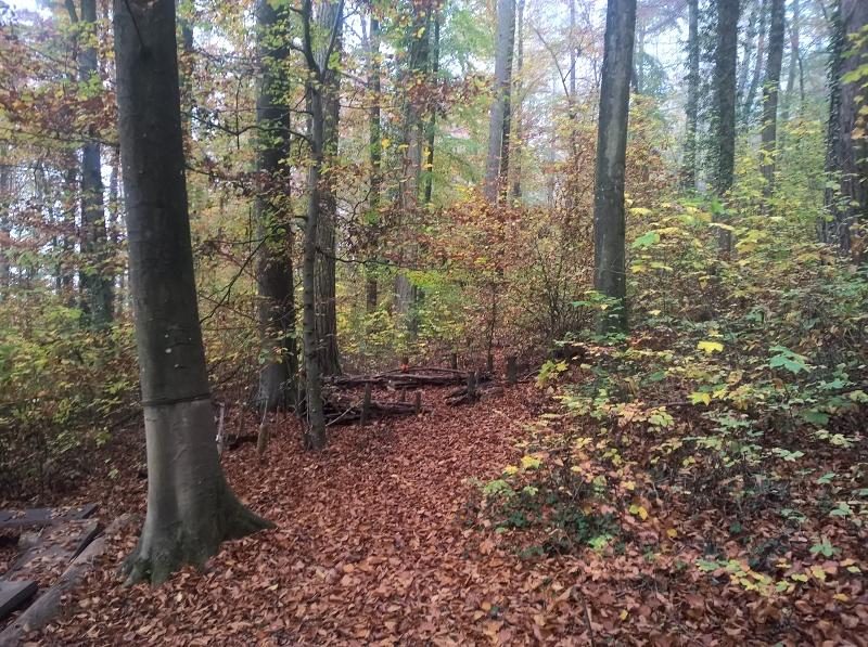 Spielorte im Wald