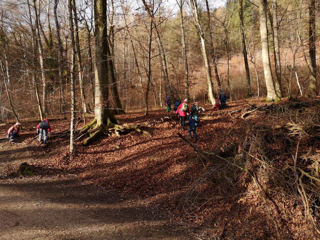 kraxeln und entdecken im Wald