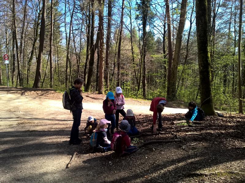 Frühlings-Waldbilder basteln