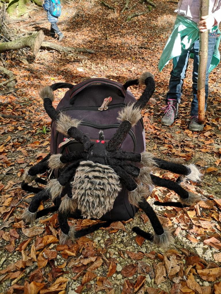 heute begleitet uns die Spinne und wir erfahren viel über sie