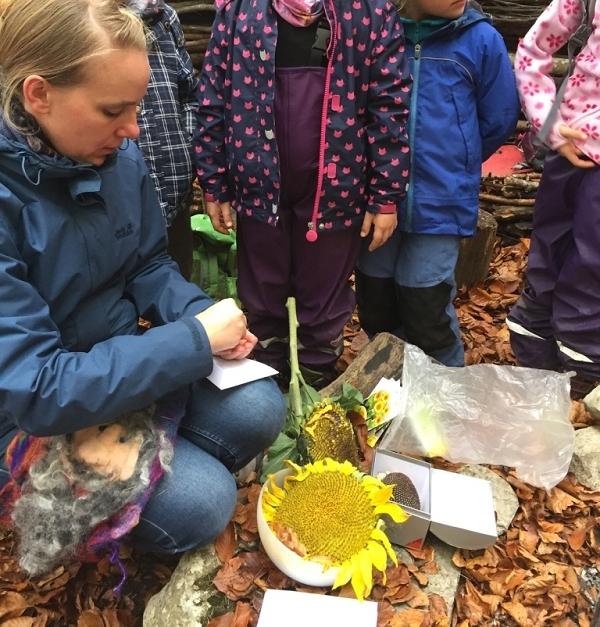 Die Kinder dürfen Sonnenblumensamen mit nach Hause nehmen und bis im Frühling ruhen lassen.