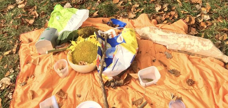 Samen in unterschiedlichen Reifeständen und viele Frasspuren werden von den Kindern untersucht