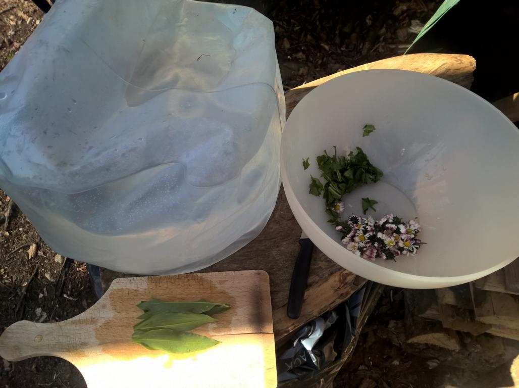 waschen und schneiden der gefundenen essbaren Pflanzen