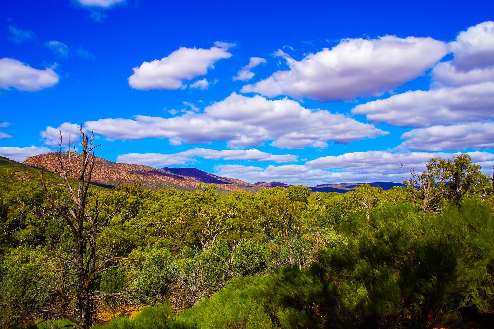 Blick vom Wangarra Lookout über die Flinders.