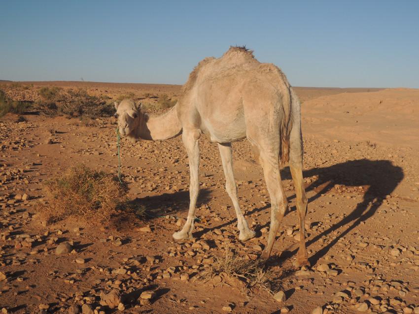 Maroc désert trek