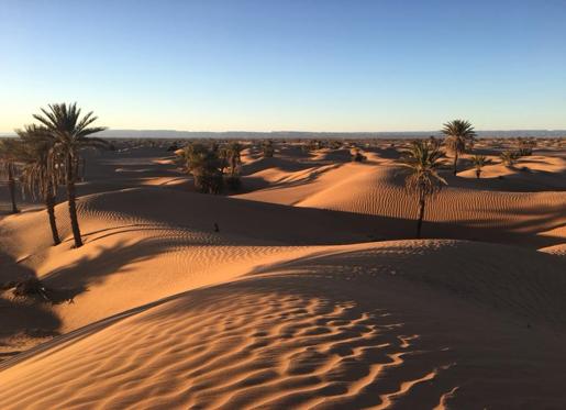 Trek sportif dans le Sahara du Maroc, vue palmeraie