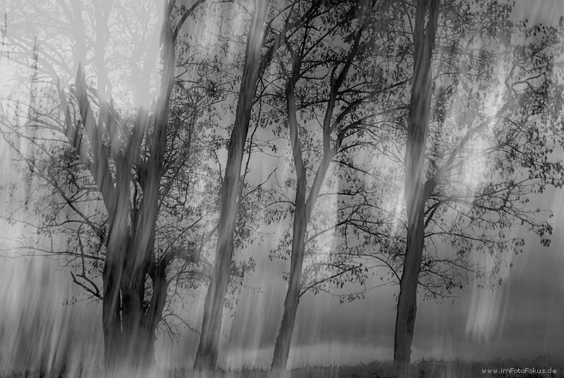 "Bäume im ""Sonnensturm"""