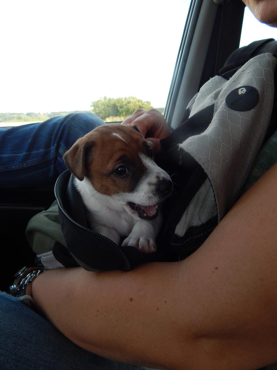 Ausflug im Auto