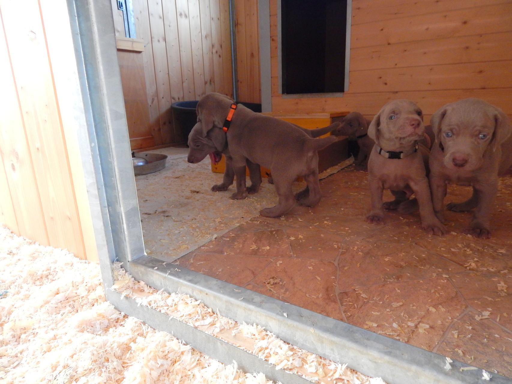 Bayko, Bakira, Bako, Bero & Bruno