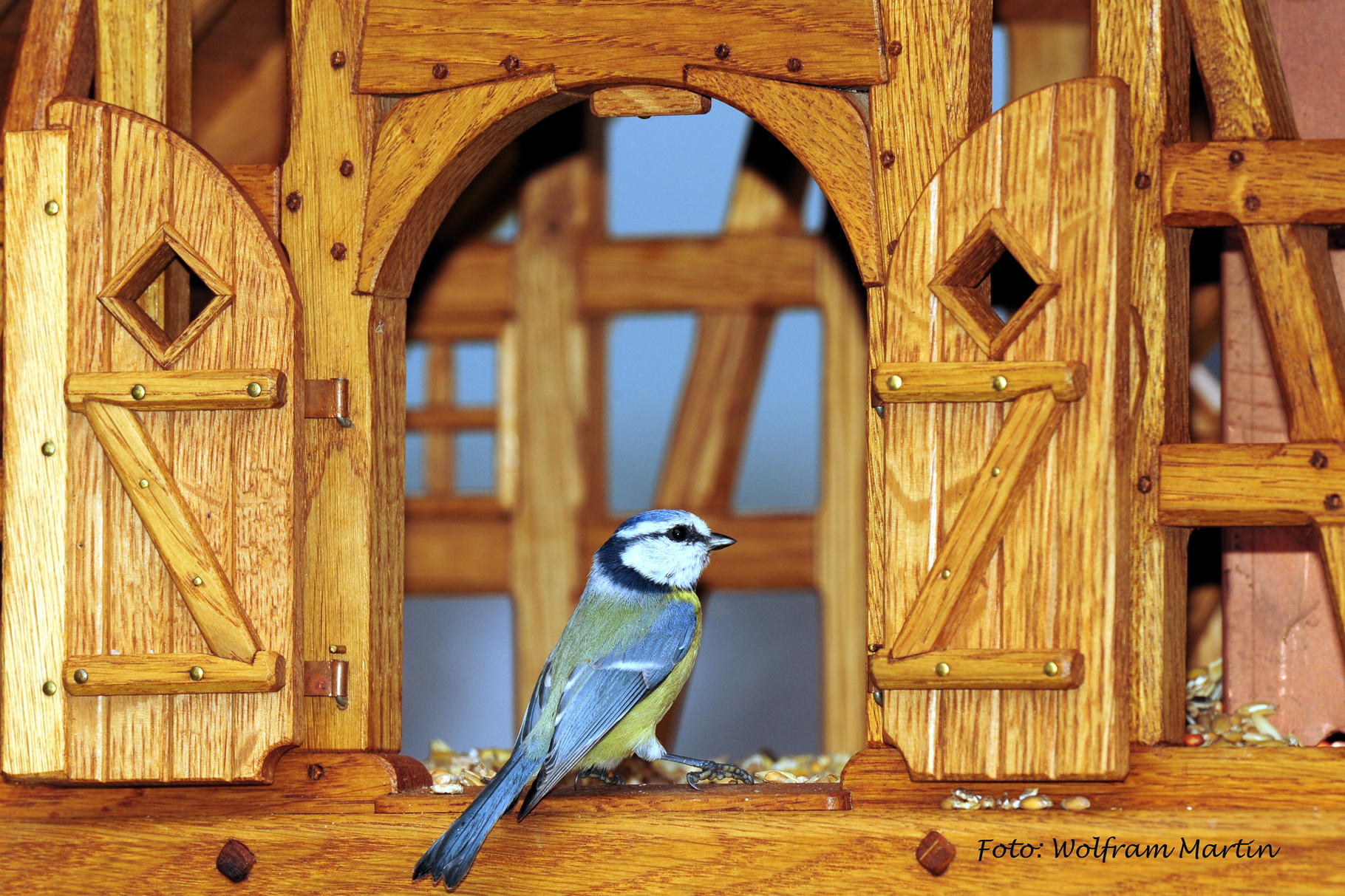 Vögel zu Besuch im First Class Vogelhotel