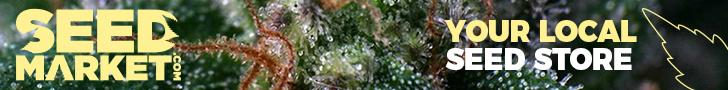 comparer les graines de cannabis des producteurs de Pays Bas