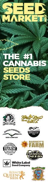 graines cannabis sensi seeds amsterdam