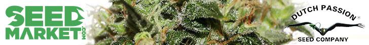 Acheter des graines de cannabis Dutch Passion - SeedMarket.com