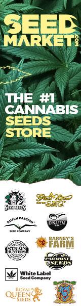 Graines de Cannabis en Ligne - SeedMarket.com