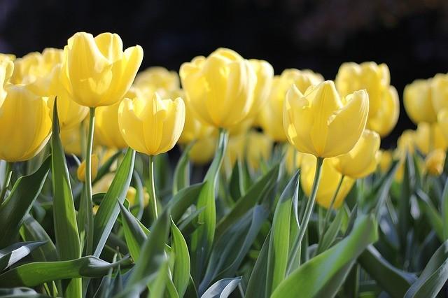 des capteurs pour les horticulteurs - Agralis à votre service
