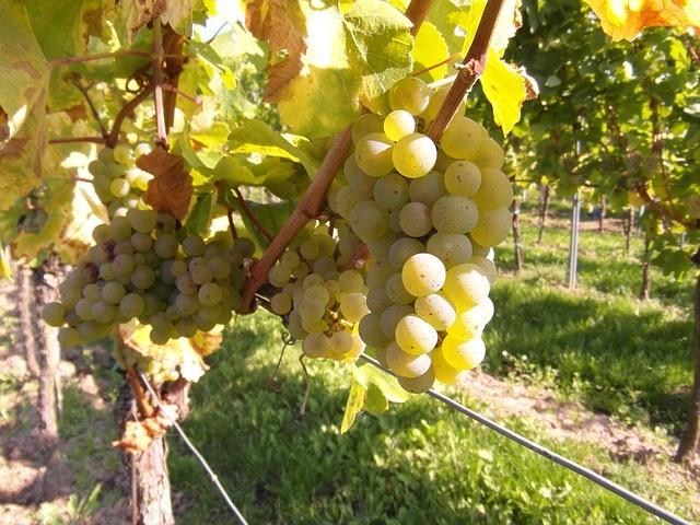 Des capteurs pour les viticulteurs - Agralis à votre service