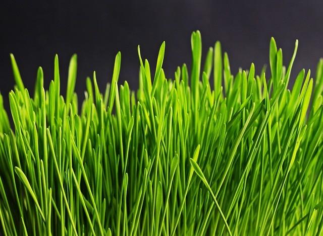 des capteurs pour les semenciers - Agralis à votre service
