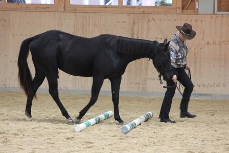 In Hand Trail 2 and 3 year old