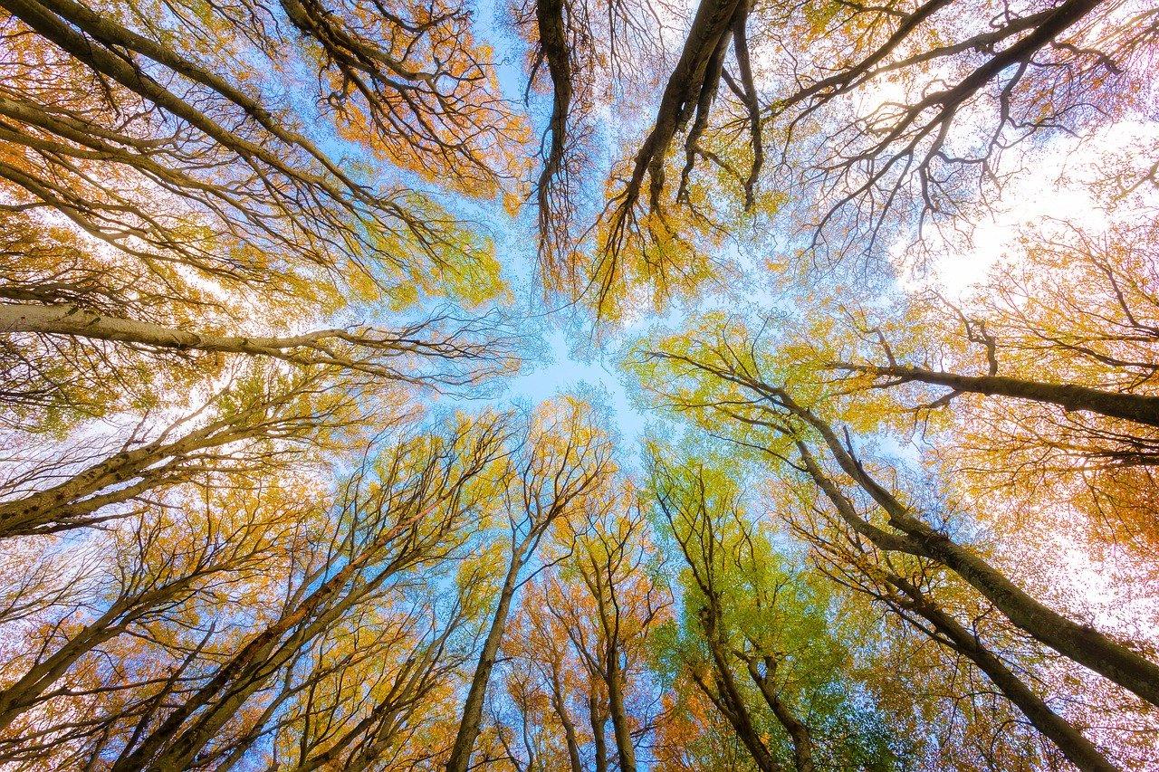 Bäume erden und verbinden mit dem Himmel