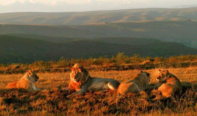 Safari Retreat mit Elela Africa