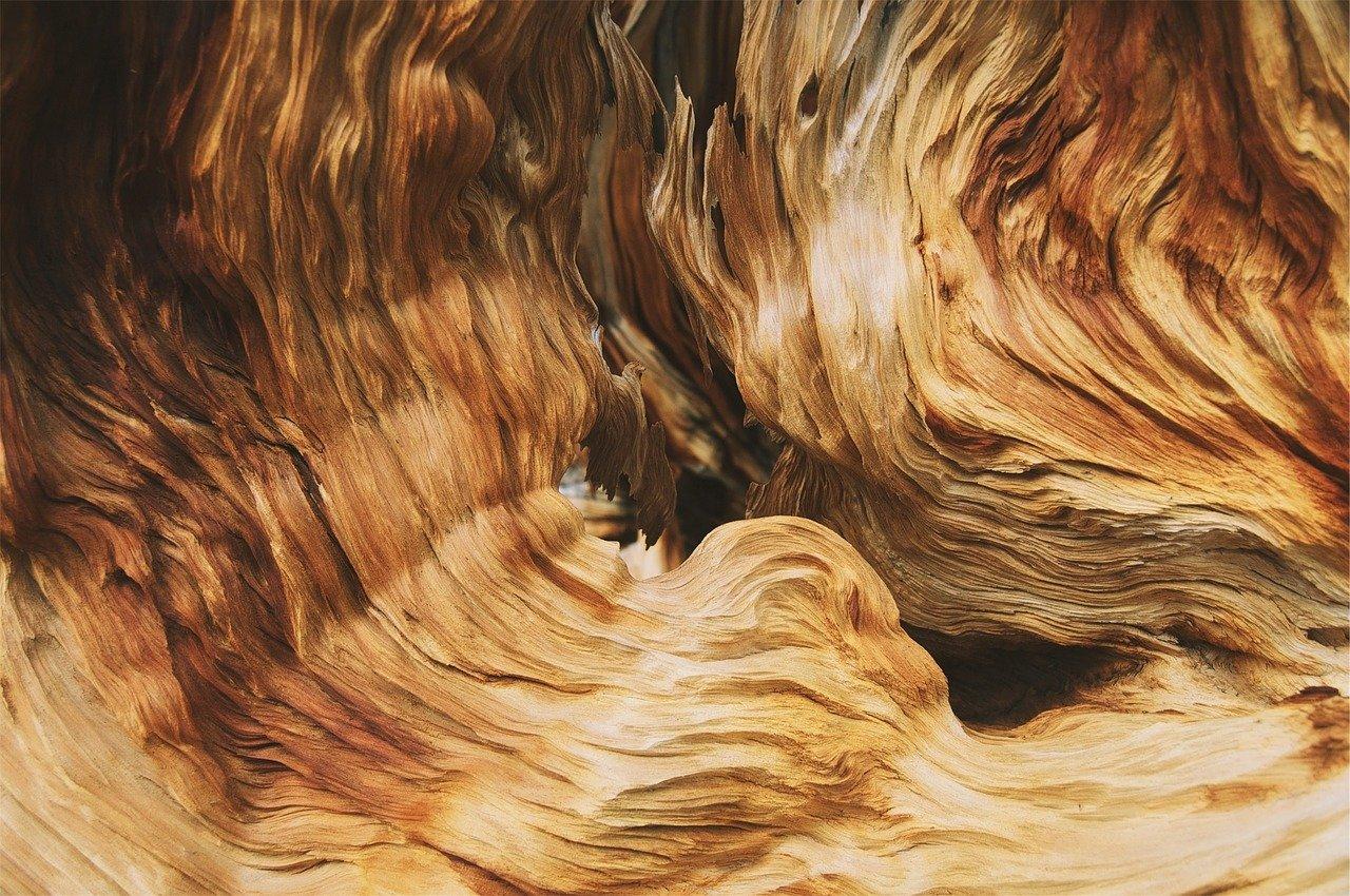 Das Innere der Bäume