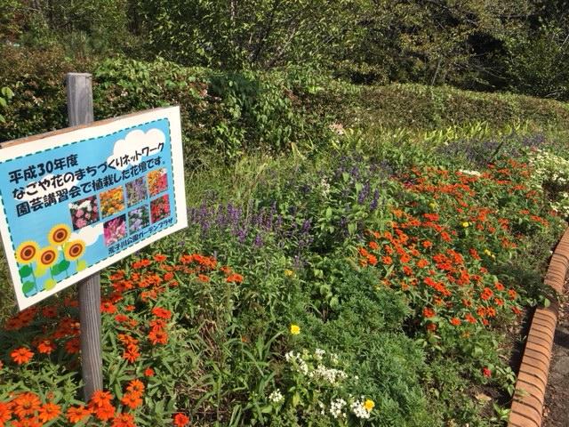 荒子川公園 花や植物