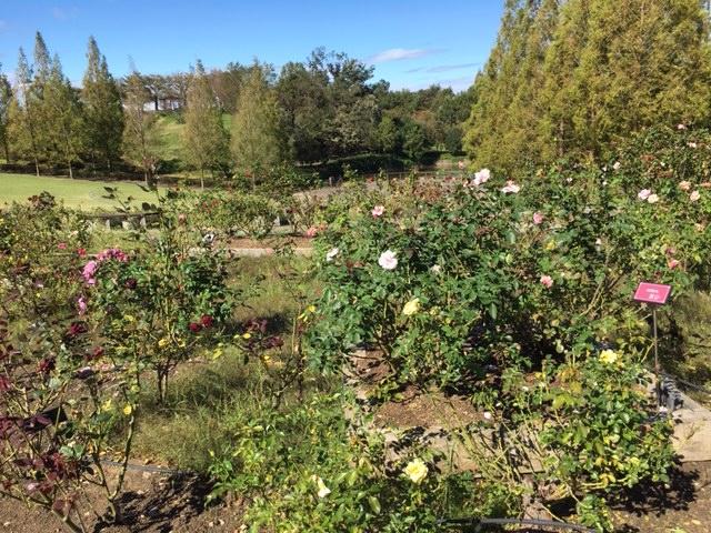 市民四季の森_季節の花・植物、桜、花見