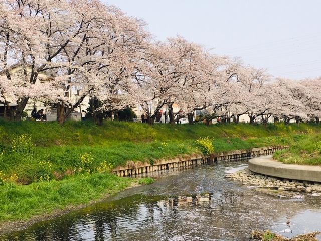 五条川_季節の花・植物