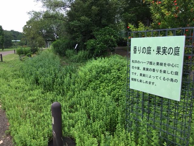 フラワーパーク江南_季節の花・植物
