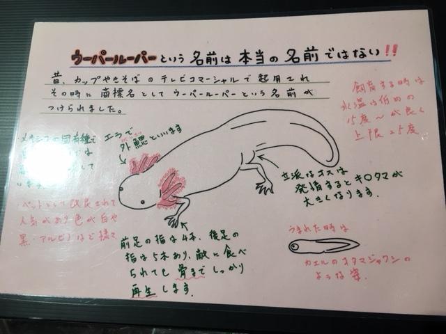竹島水族館_おもしろ解説、解説、おもしろい