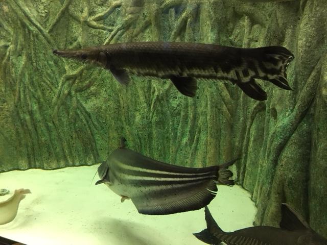 竹島水族館_生き物、生物、魚