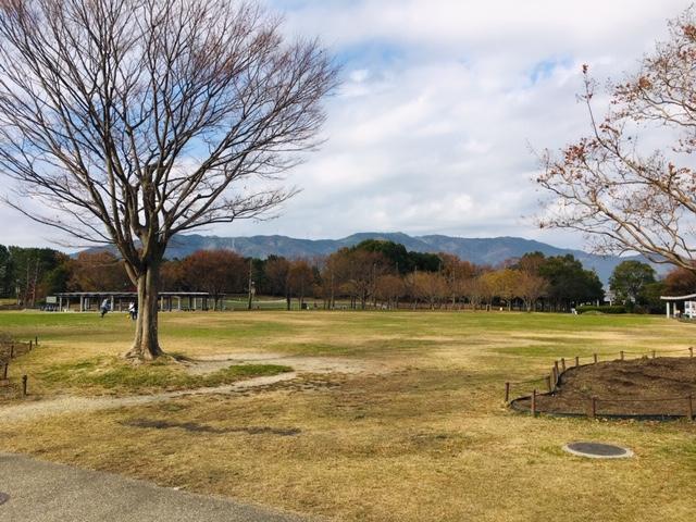木曽三川公園センター_ピクニック・芝生広場