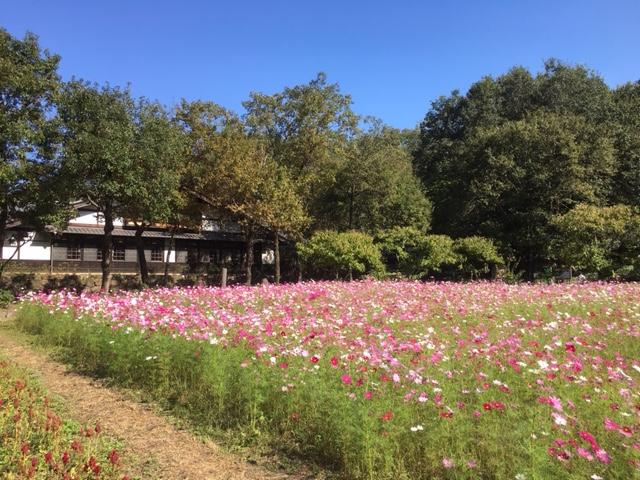 ぎふ清流里山公園_季節の花・植物