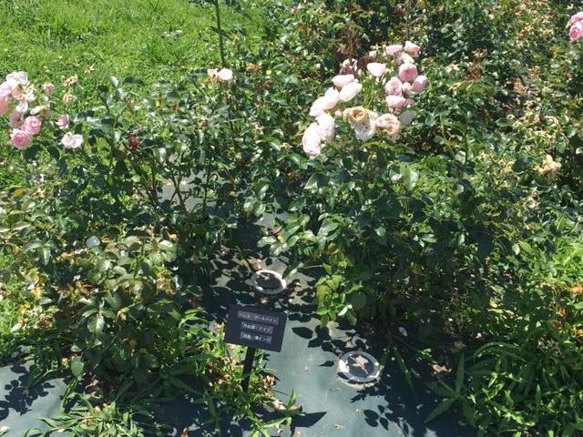 138タワーパーク_季節の花・植物