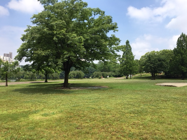 平和公園_ピクニック・芝生広場