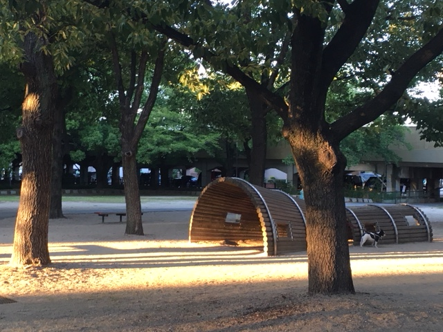 二子山公園_遊具