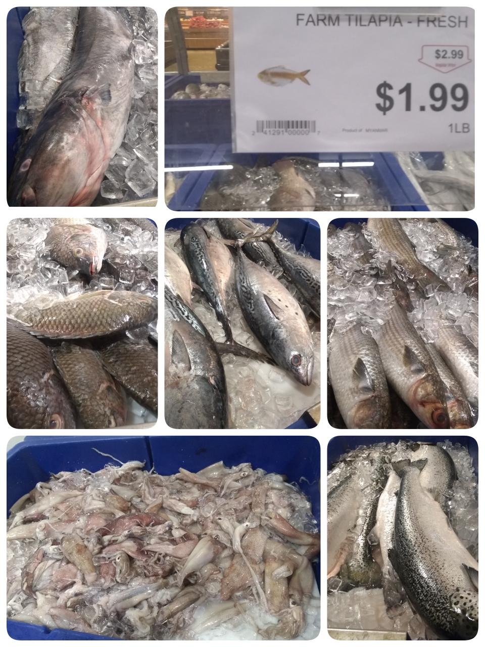 色んな魚介類