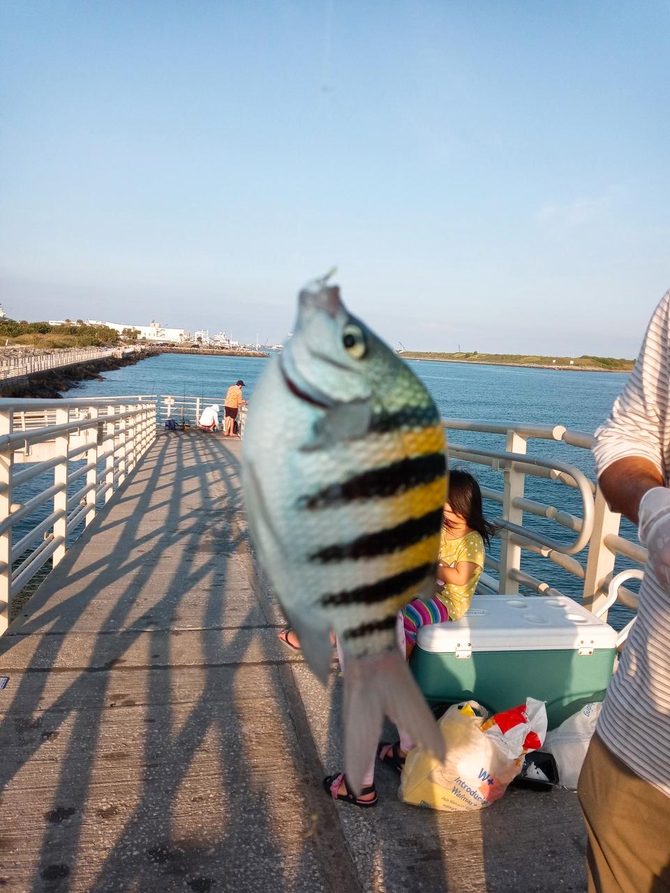 お名前は知らないけどたくさん釣れた魚🐠