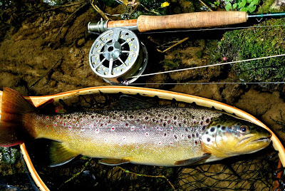 big brown trout on mayfly imitation on flyrod while flyfishing lamson