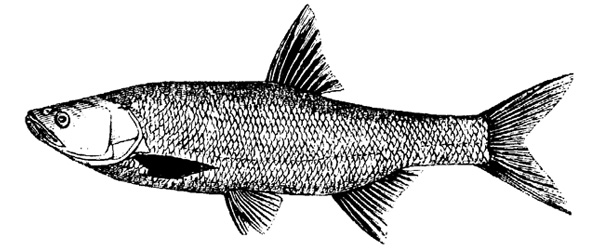 Danica Dudes Fly Fishing - Fliegenfischen Blog